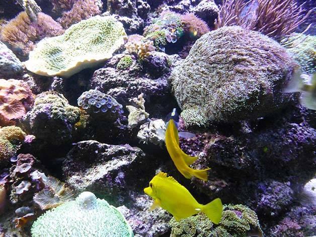 corales acuario
