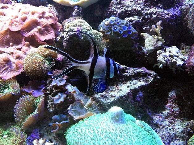 pez acuario