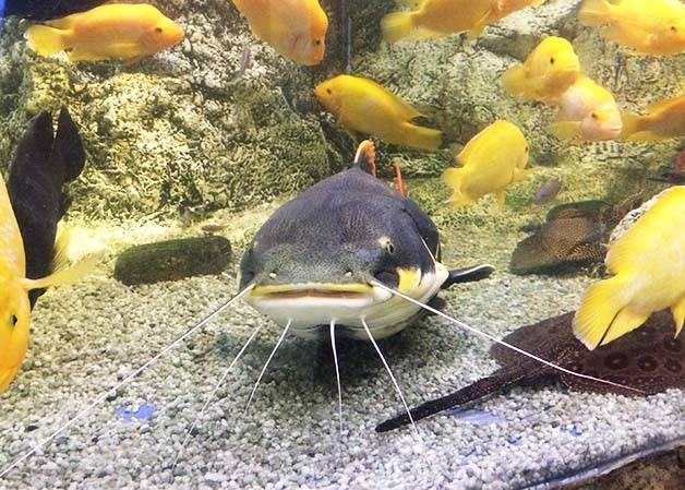 pez trópicos acuario