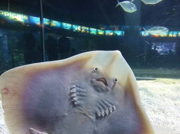 raya del acuario Barcelona en familia