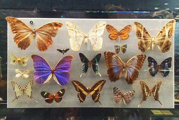 museo de ciencias naturales mariposas