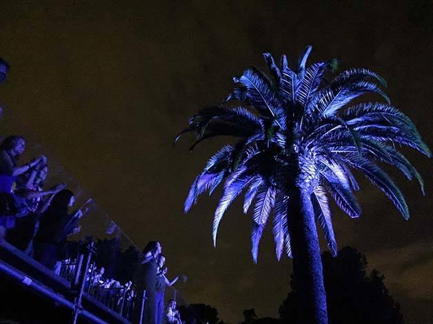 palmier au festival de Pedralbes