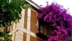 Sarrià edificio flores
