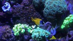 niños aquarium Barcelona