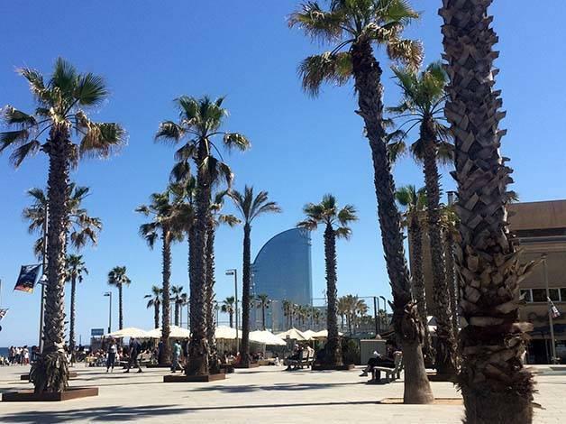 hotel W palmeras