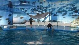 zoo Barcelona delfín
