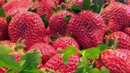 fresas abril