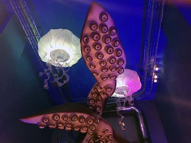 verne medusas y pulpos de la primera sala