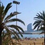 palmeras paseo marítimo Barcelona